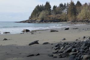 JdFBH beach Mar 15 2b