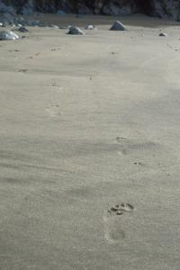 JdFBH beach Mar 15b